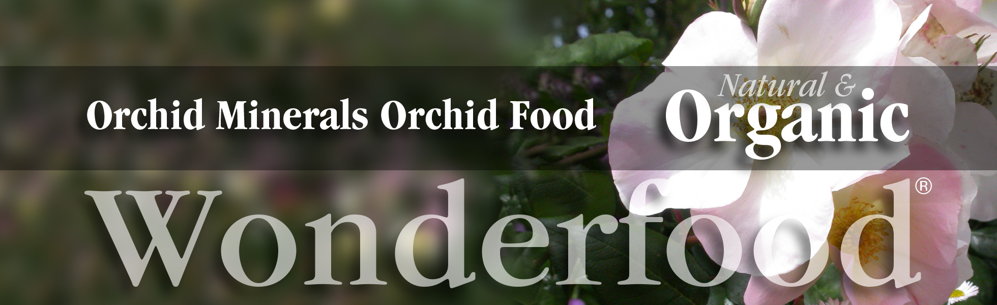 Organic orchid food and plant food for healthy, colorful, vibrant orchids