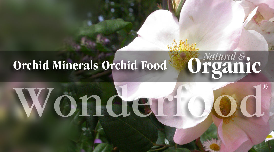 Organic orchid food keeps orchids healthy